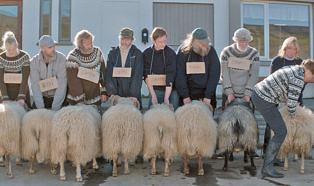 Rams | ein Film von Grímur Hákonarson
